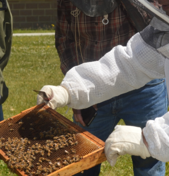 Images Go to the New Detail: Honey bee hives calling Grenfell Campus home